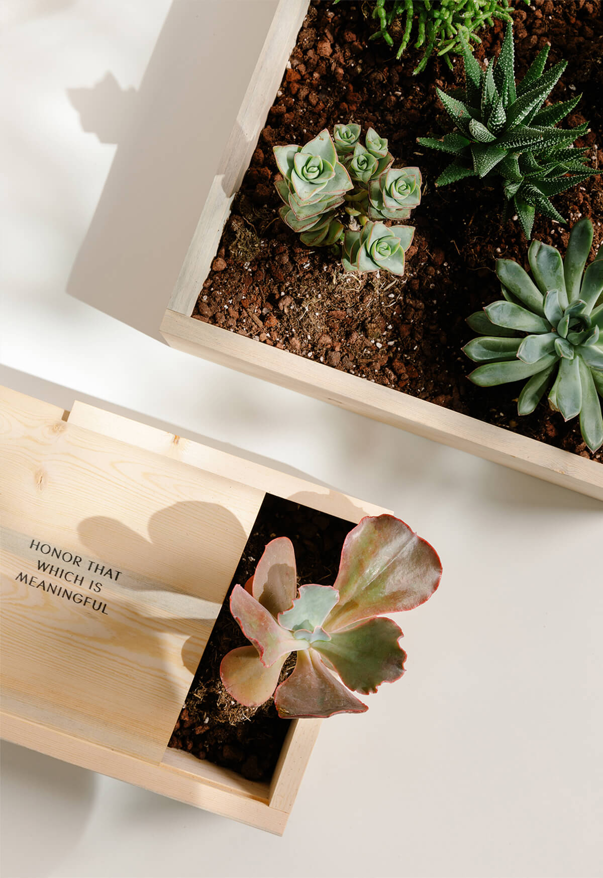 Artifact Uprising Wooden Quote Box used for succulent houseplants