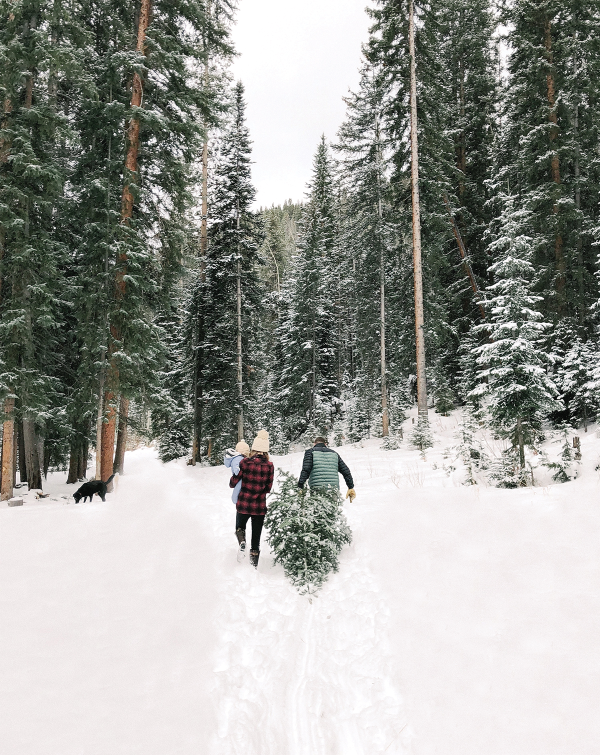 Couple with a baby pulling a freshly cut tree behind them through the snow