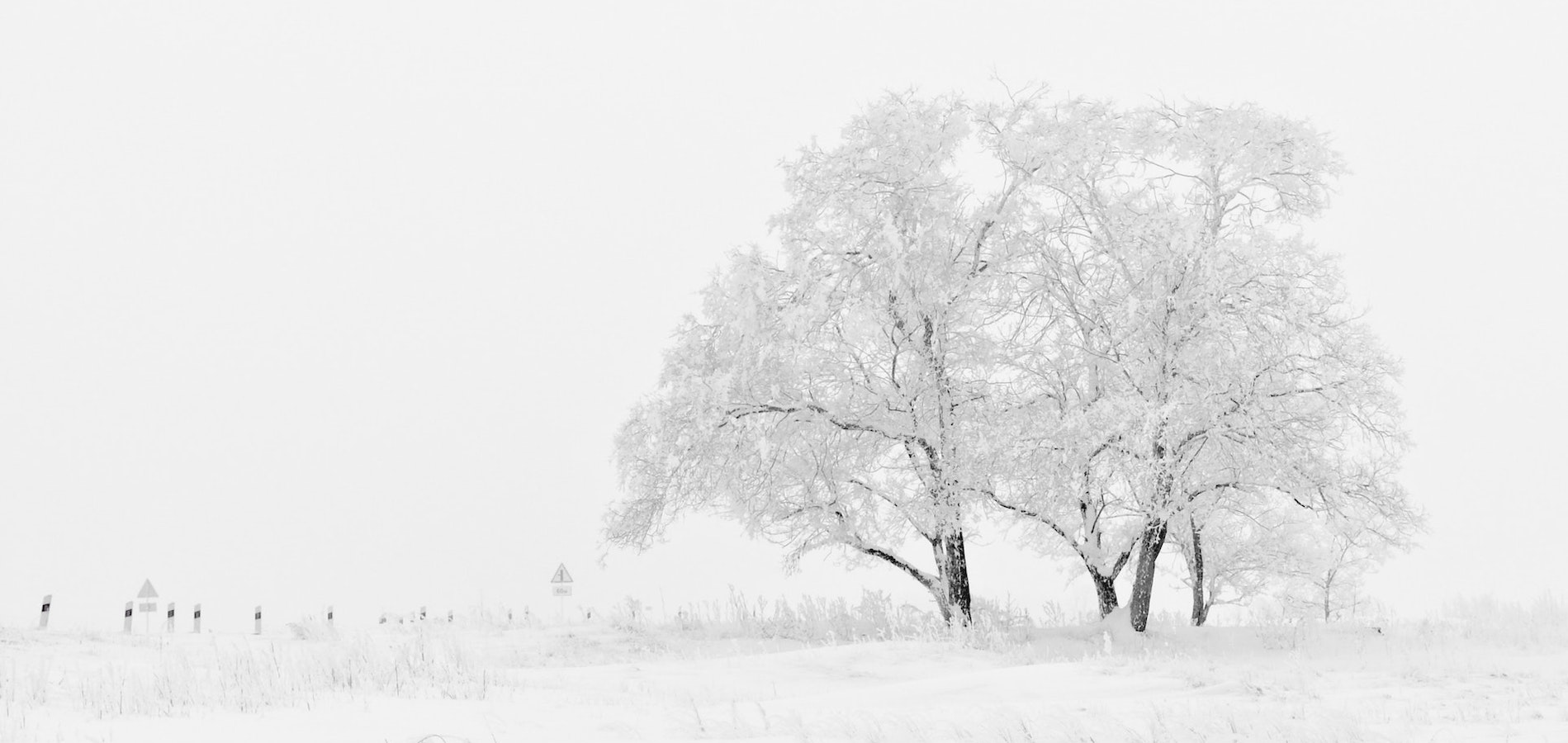 Photo of snowy tree taken using winter photography tips