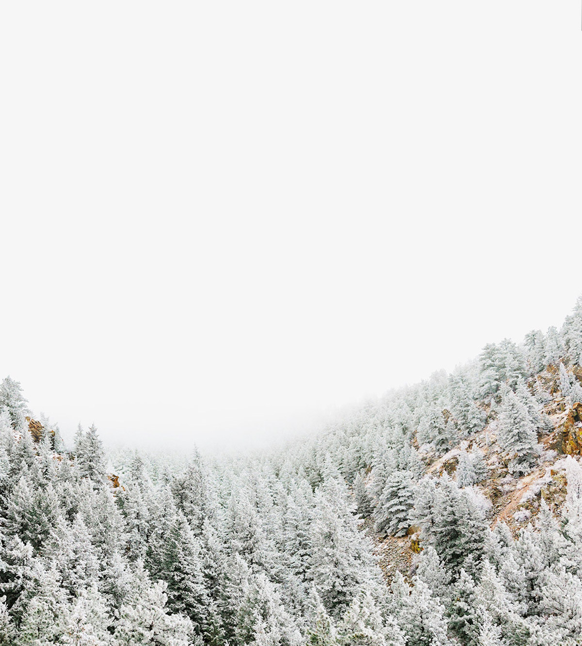 Frosted trees on a mountain hillside