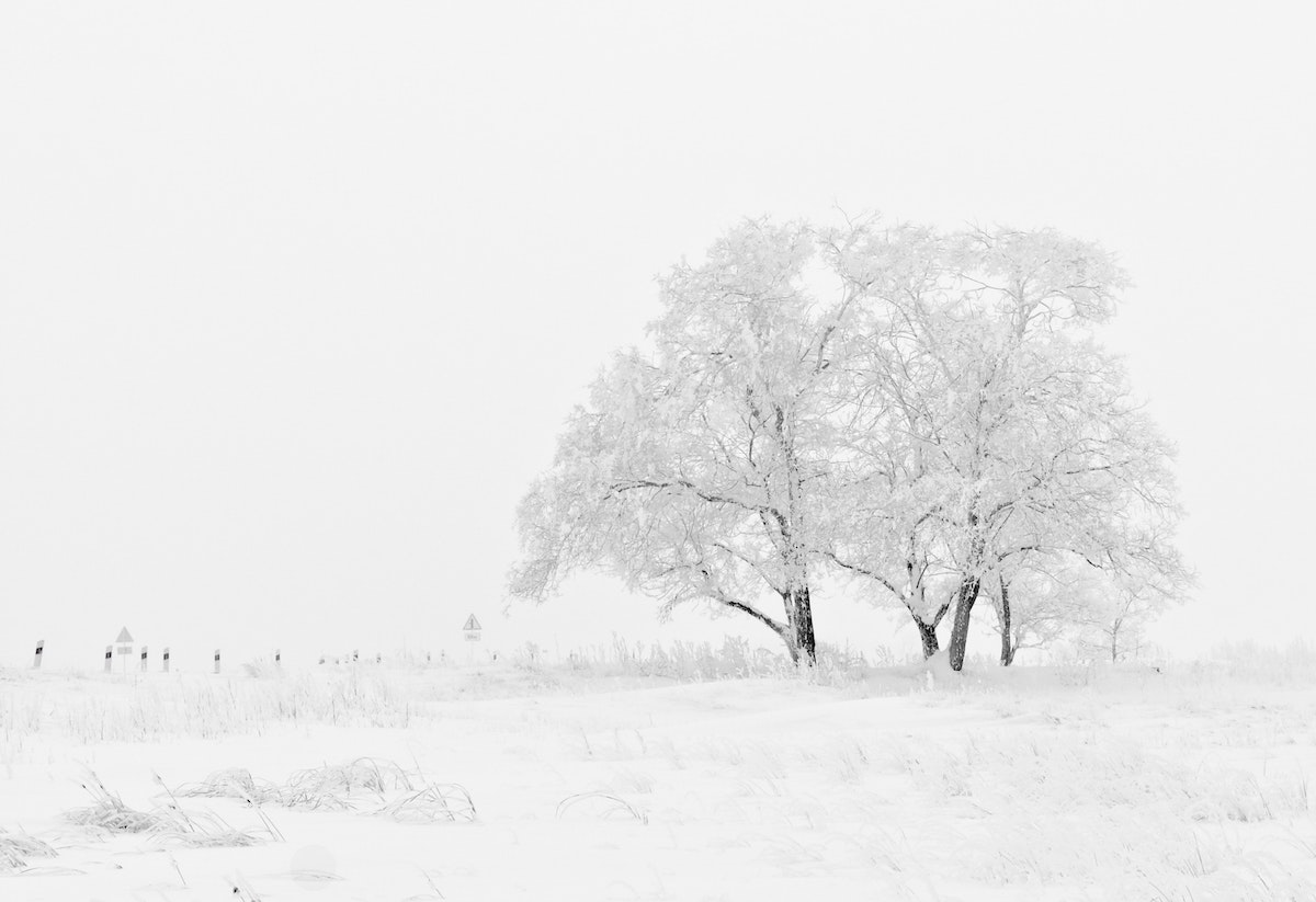 Snowy tree in the foreground of a snowy landscape photo