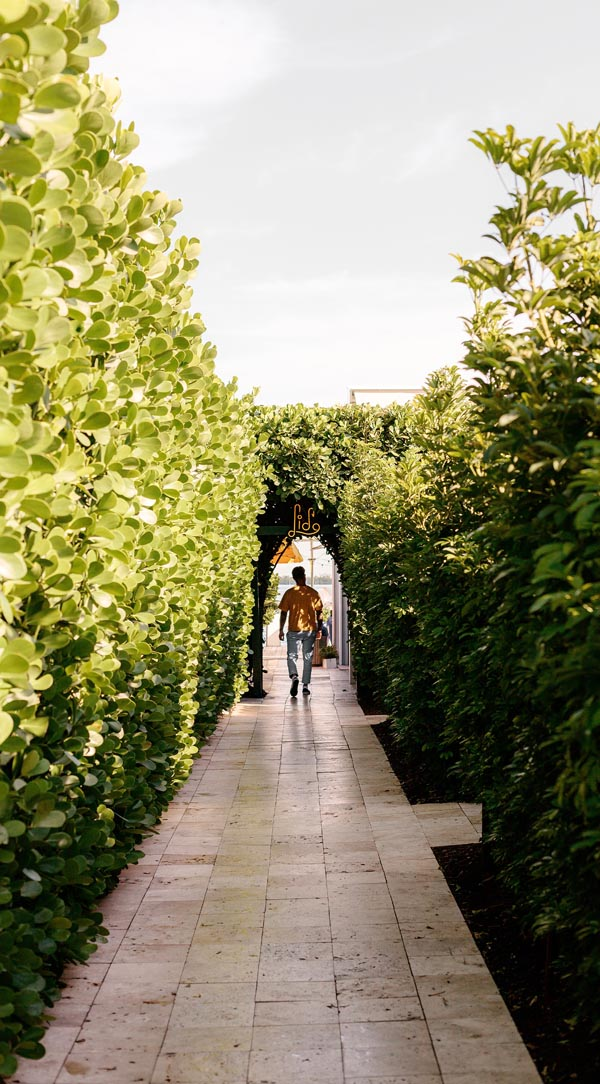 Edited photo with adjusted contrast of man walking down pathway lined by vines