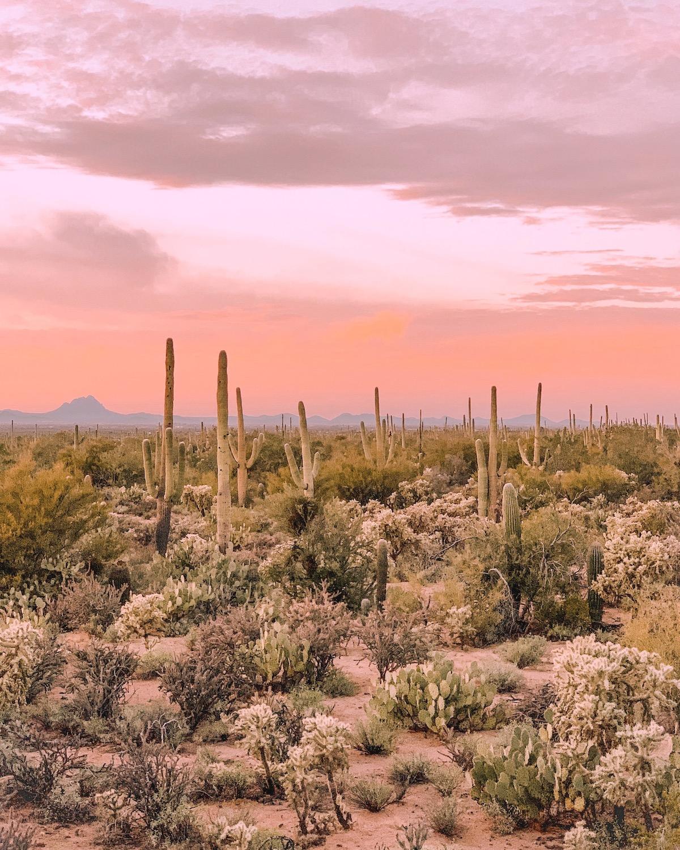 Pink sunset over the desert landscape at Joshua Tree