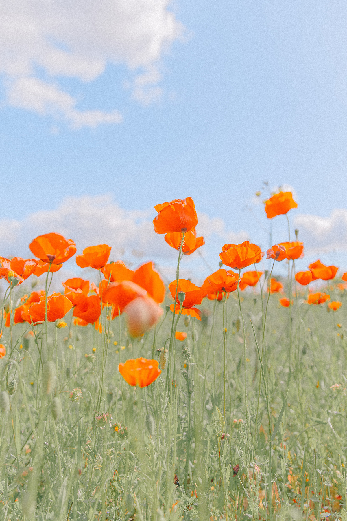 Photo by Teresa Freitas of Portuguese flower field
