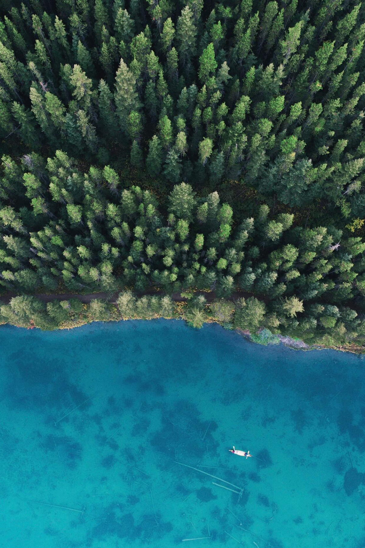 Drone photo by Dirk Dallas of water and trees