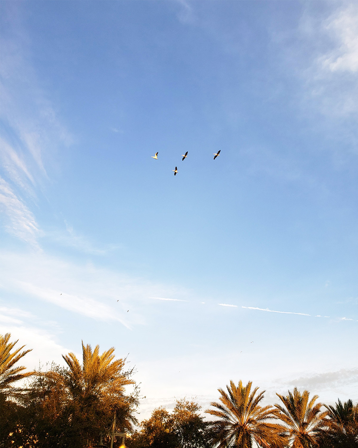 Birds flying in a blue sky