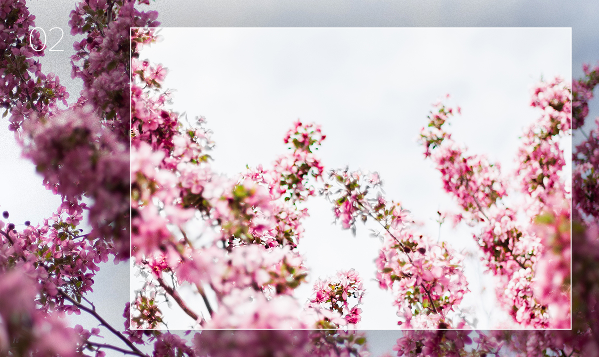 lightroom preset applied to photo of flowering tree branches