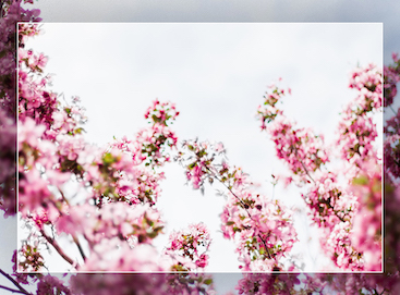 Lightroom preset applied to image of flowering tree branches