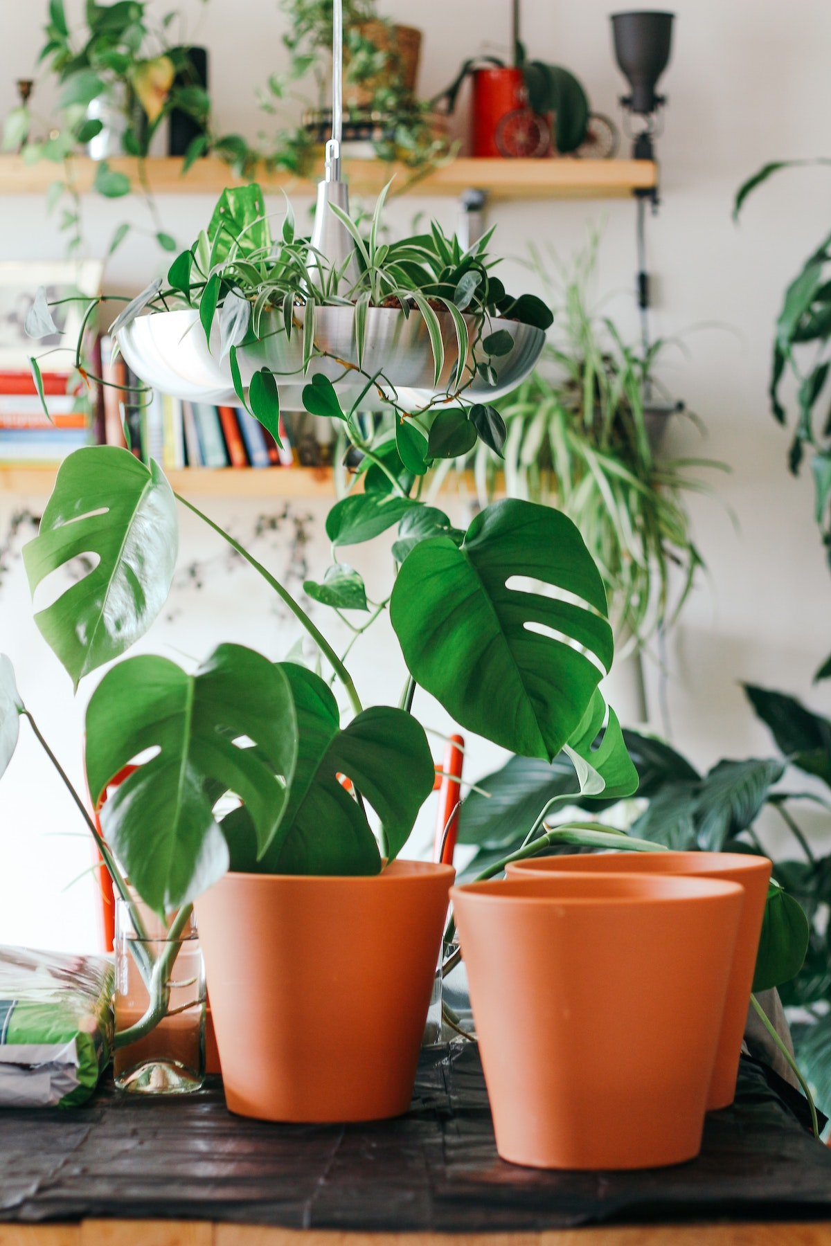 Photo of monstera plants and other houseplants in background