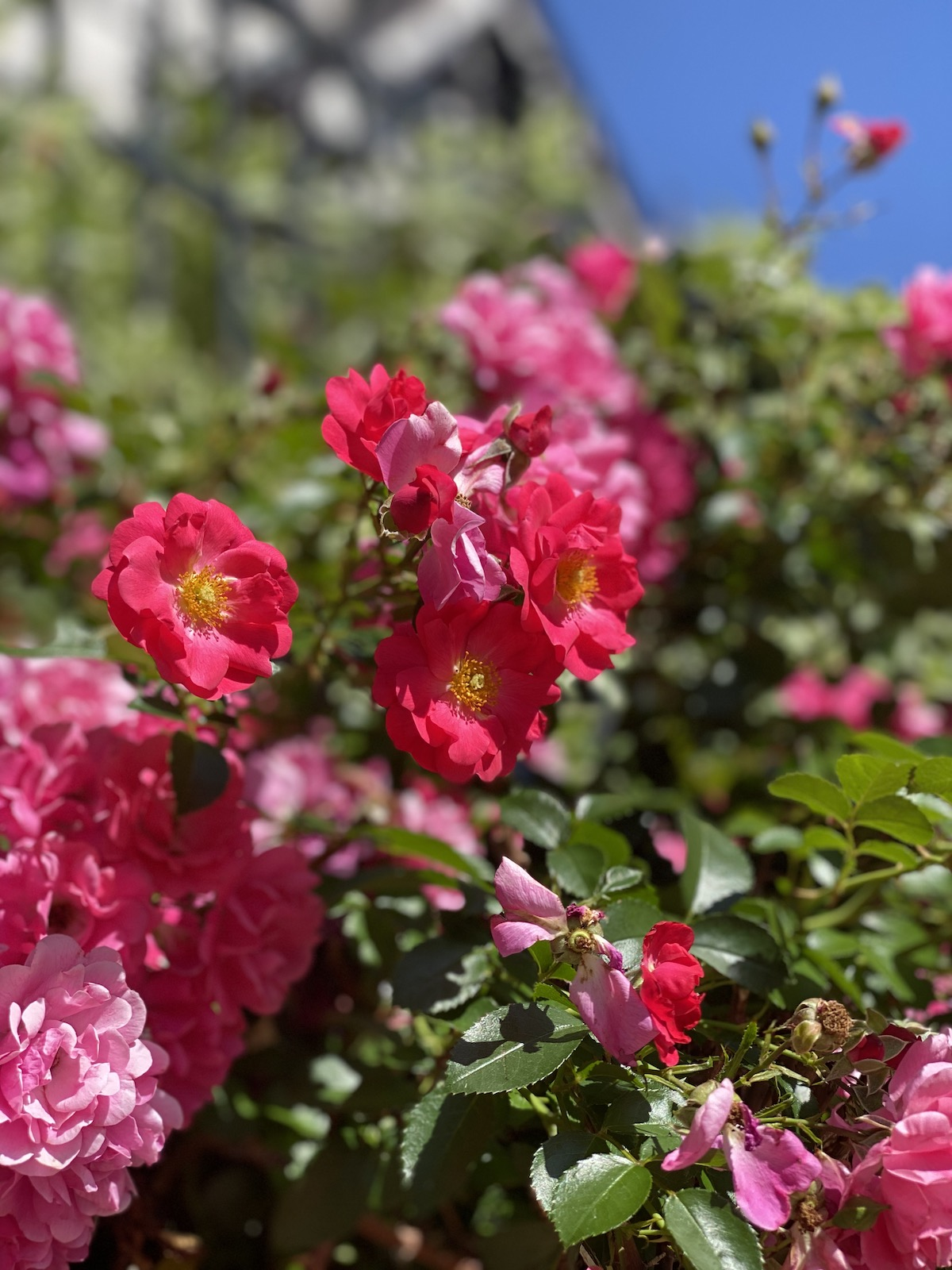 Flower-Filled Foreground - Pink Flowers