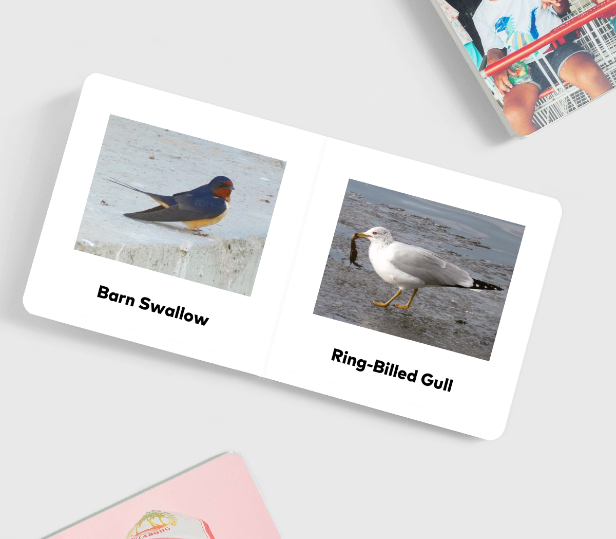 Board book opened to photos of birds with names below images