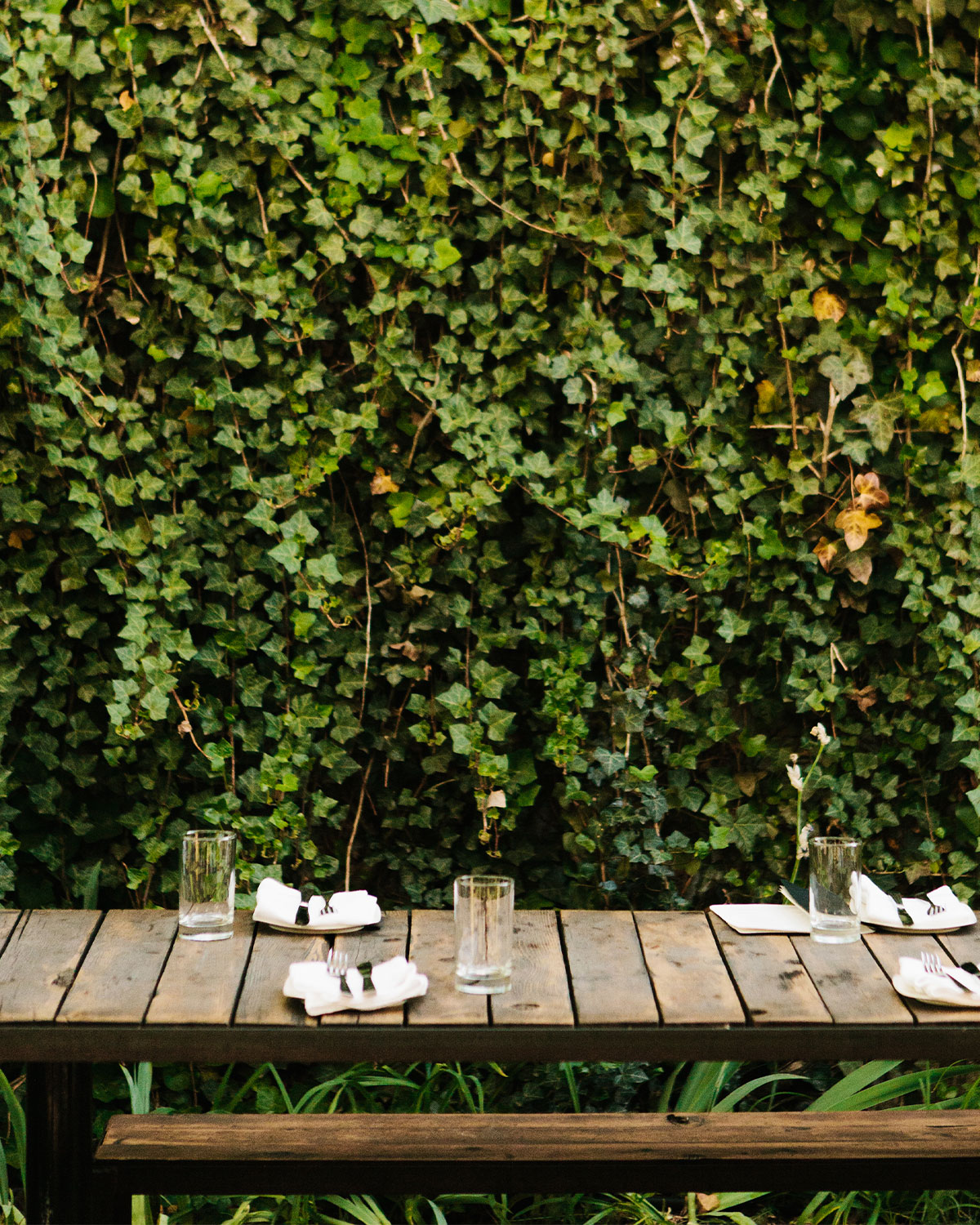 Restaurant patio with long vines covering the surrounding walls