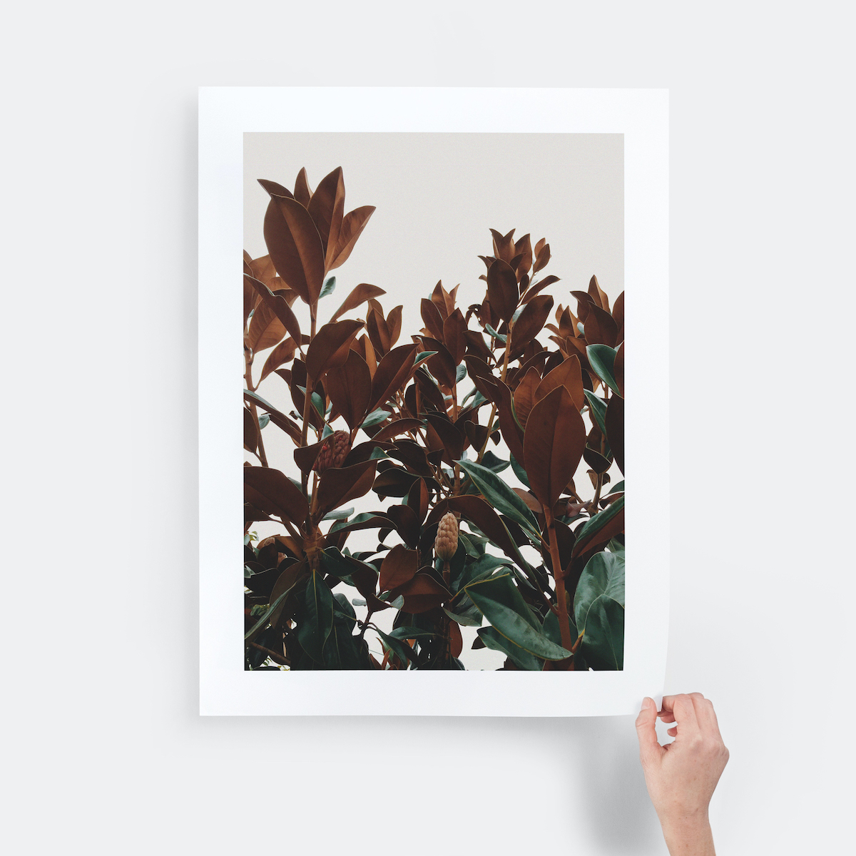 hand holding a giclée print of red flowers by the corner