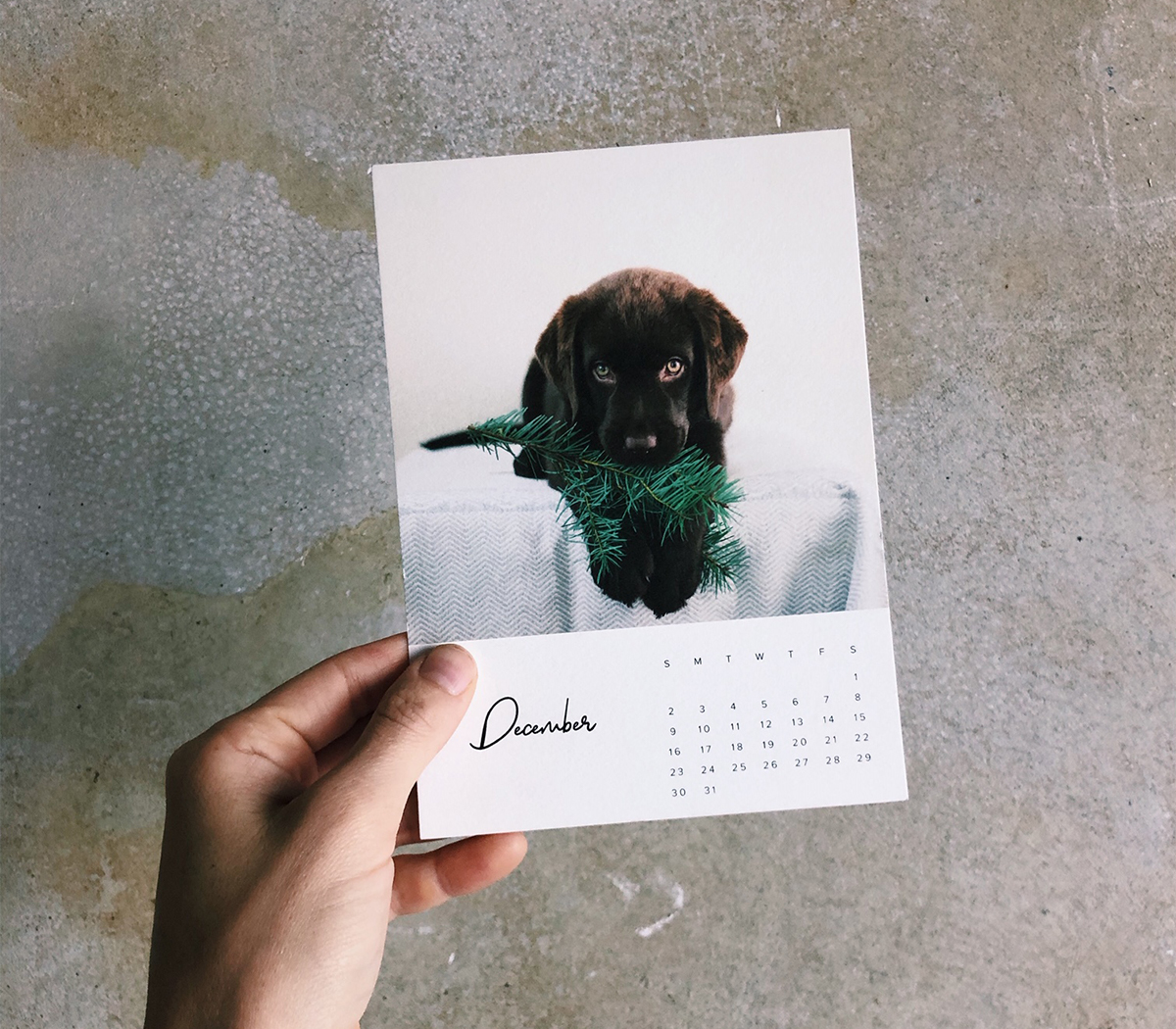 Photo by @morningswithskye of Artifact Uprising calendar print featuring puppy