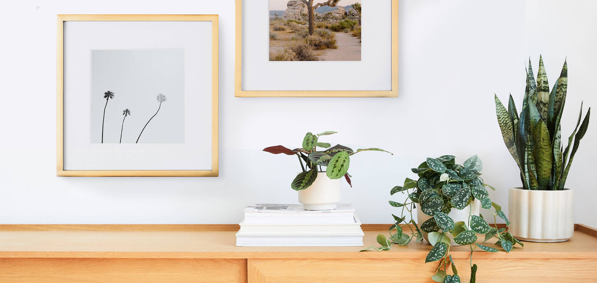 How To Pair Plants Photo Decor Artifact Uprising X The Sill