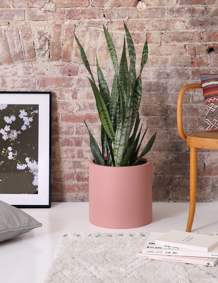 Large snake plant in blush planter ground next to Gallery Frame of white blooms
