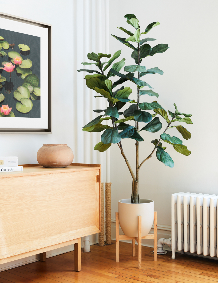 Large Fiddle Leaf Fig Tree next to Framed Canvas Print of water lily