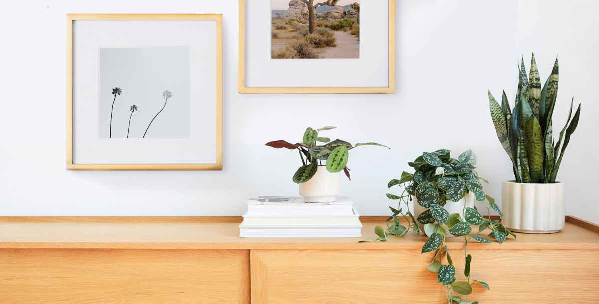 Metal Tabletop Frames in Brass hanging above prayer plant and other plants on shelf