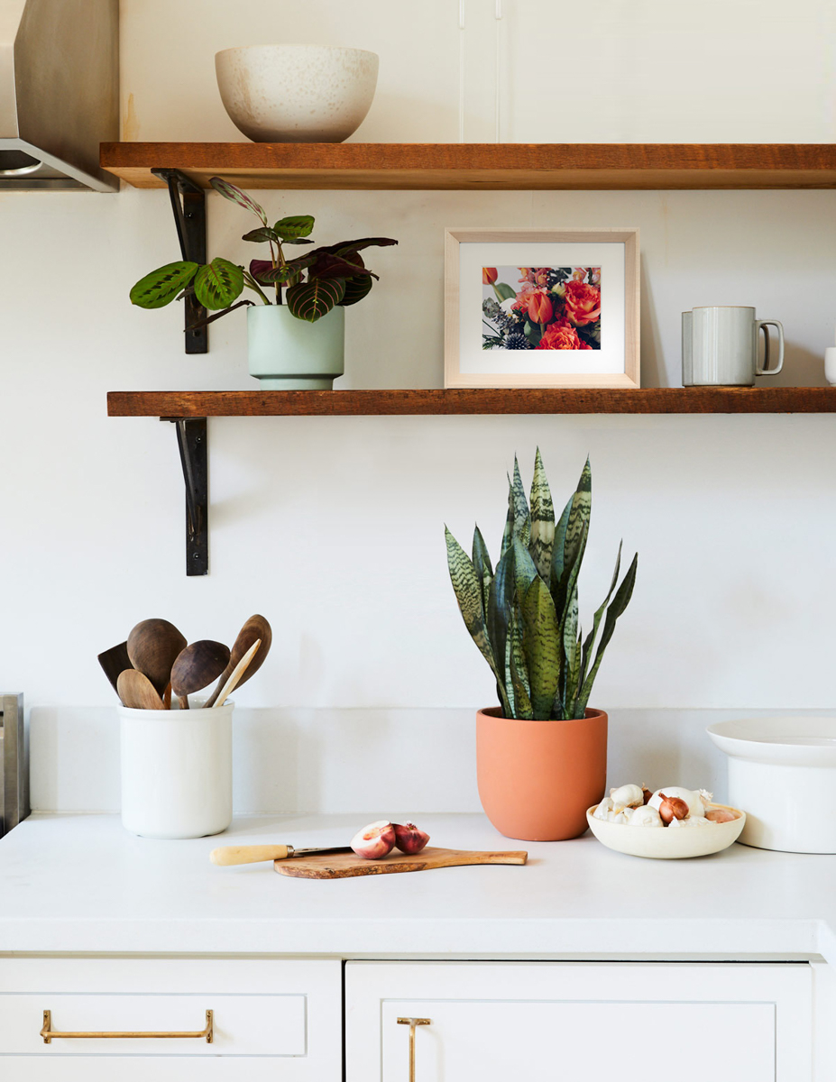 Kitchen shelves with prayer plant, snake plant, and small Wooden Tabletop Frame of bouquet