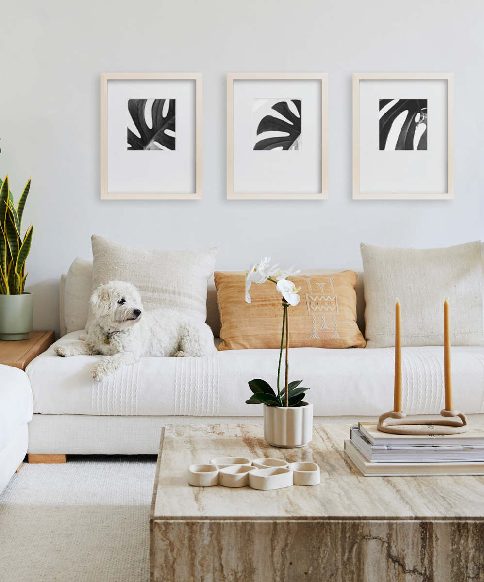Dog laying on couch under trio of Gallery Frames featuring zoomed in images of Monstera leaves