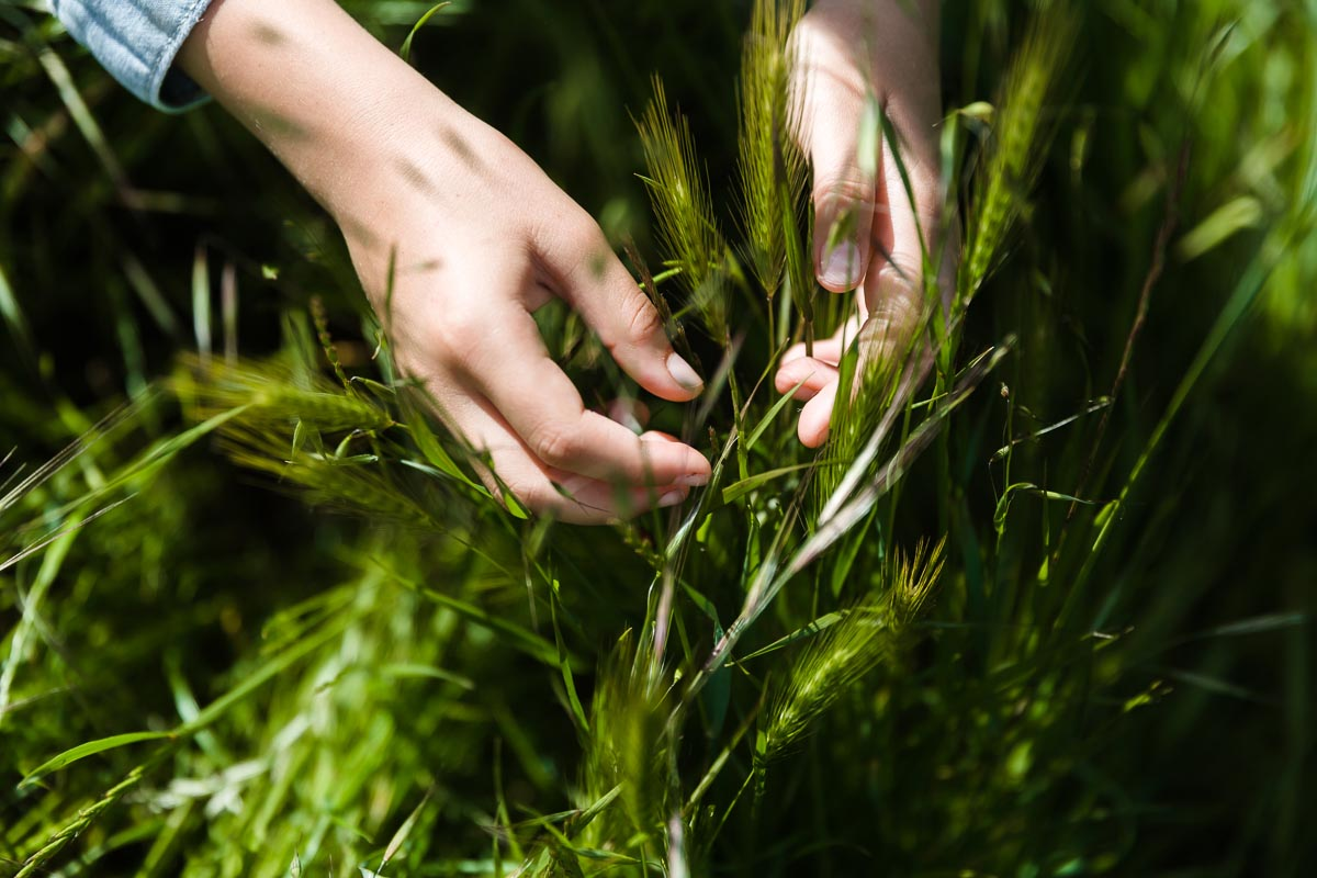 Photo by Kelly Sweda of hands in the grass