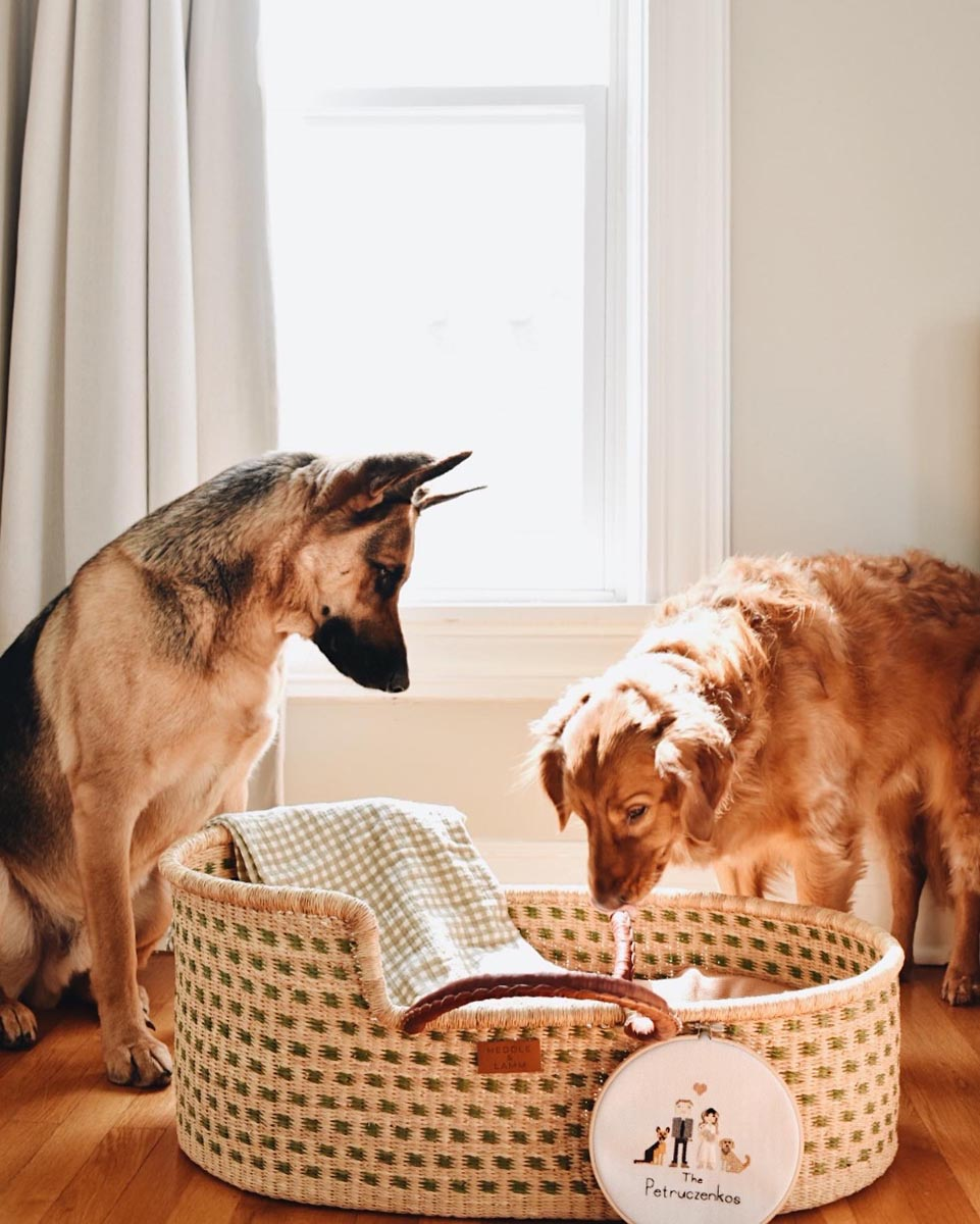 Pair of pups peering into baby basket