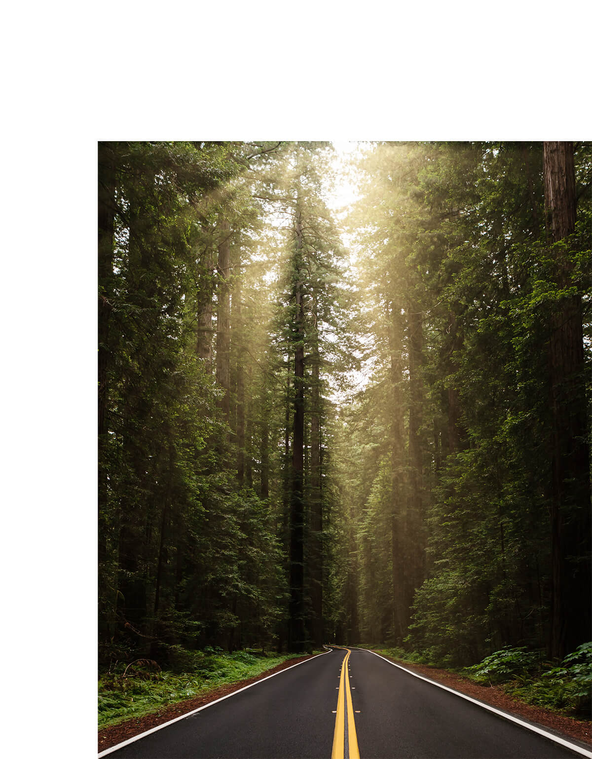 Photo by Brandon Lopez of sun peaking throw row of tall pines alongside the road