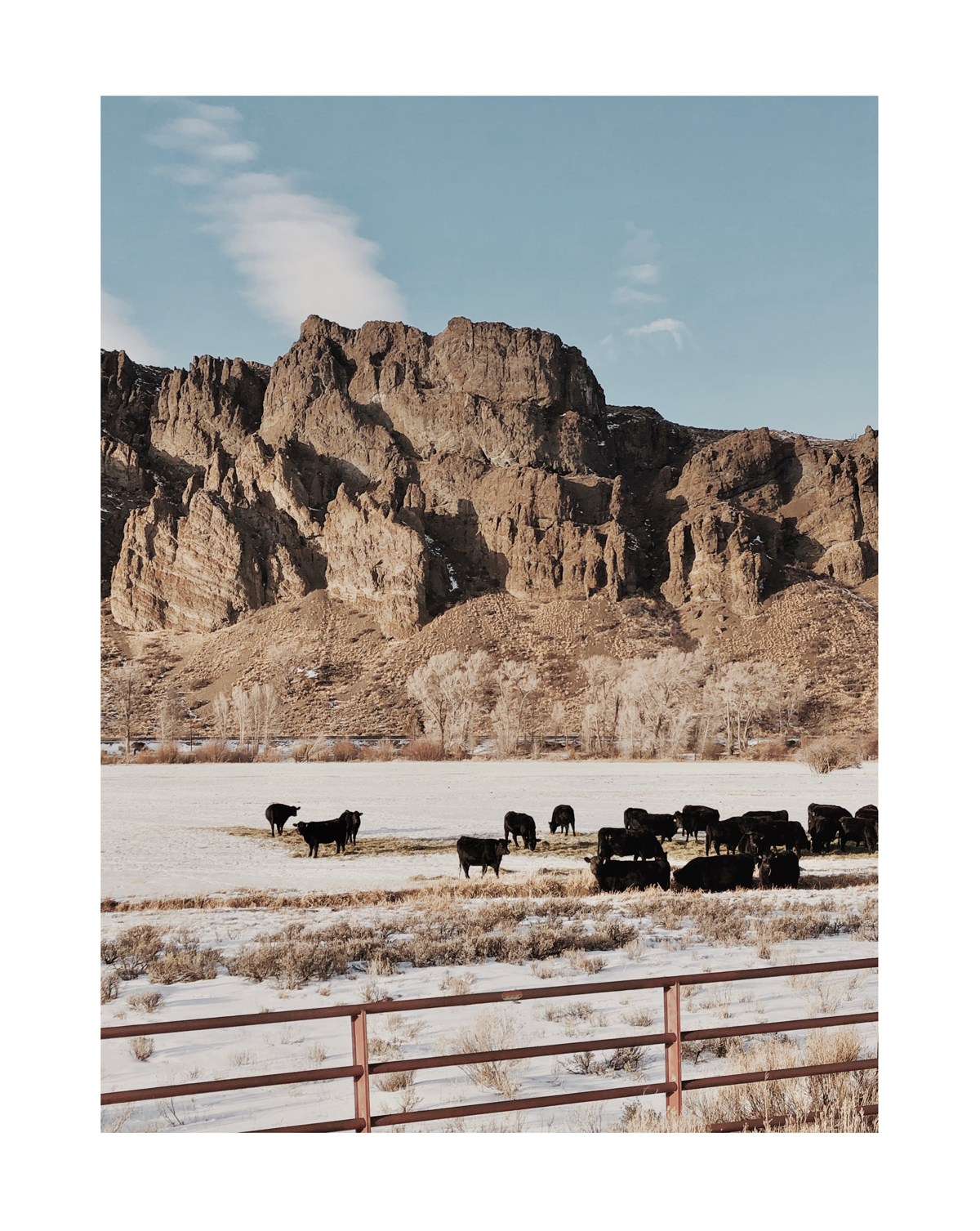 Photo by Molly Olwig of cattle grazing in front of rock formations