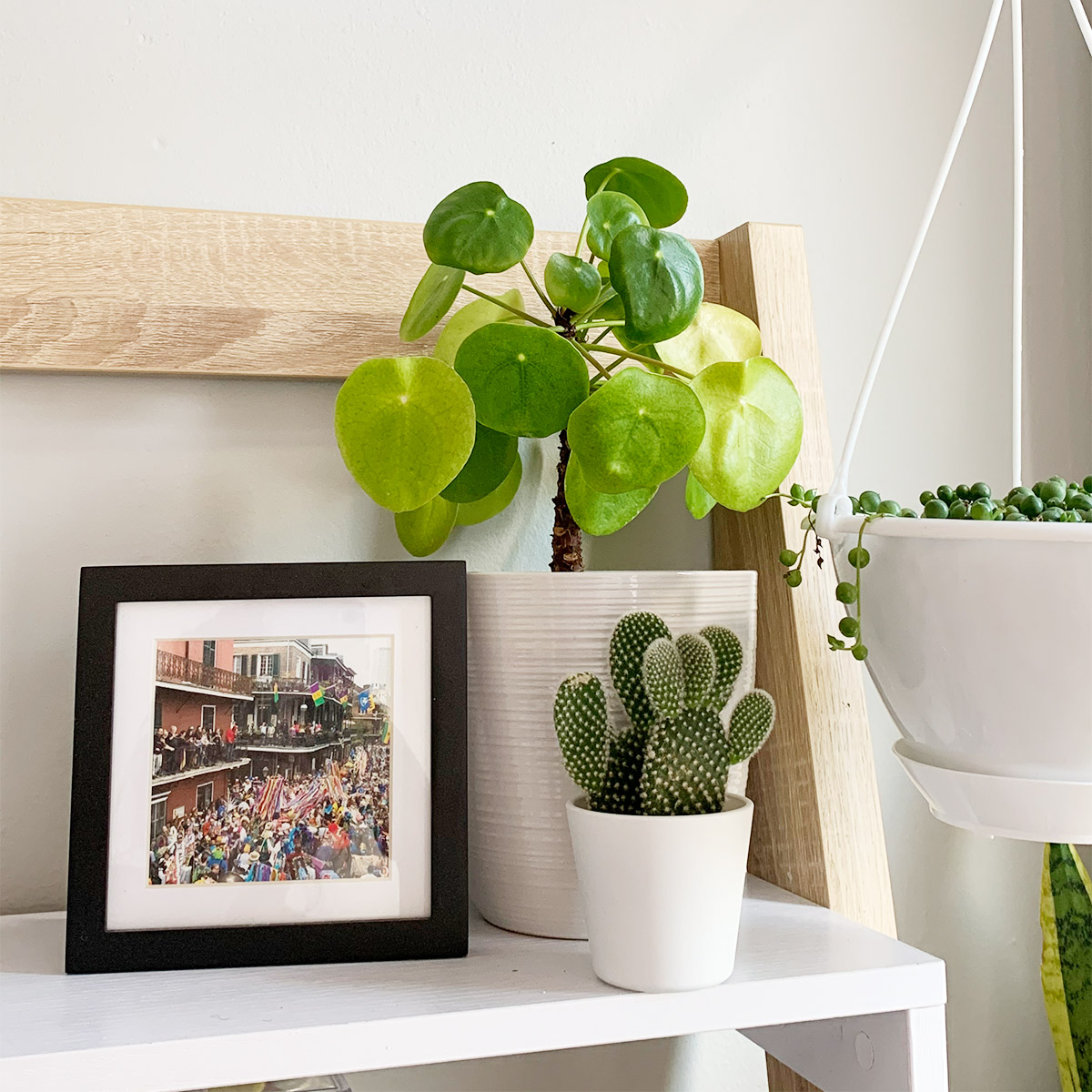 Two potted plants next to hanging string of pearls and Artifact Uprising Metal Tabletop Frame