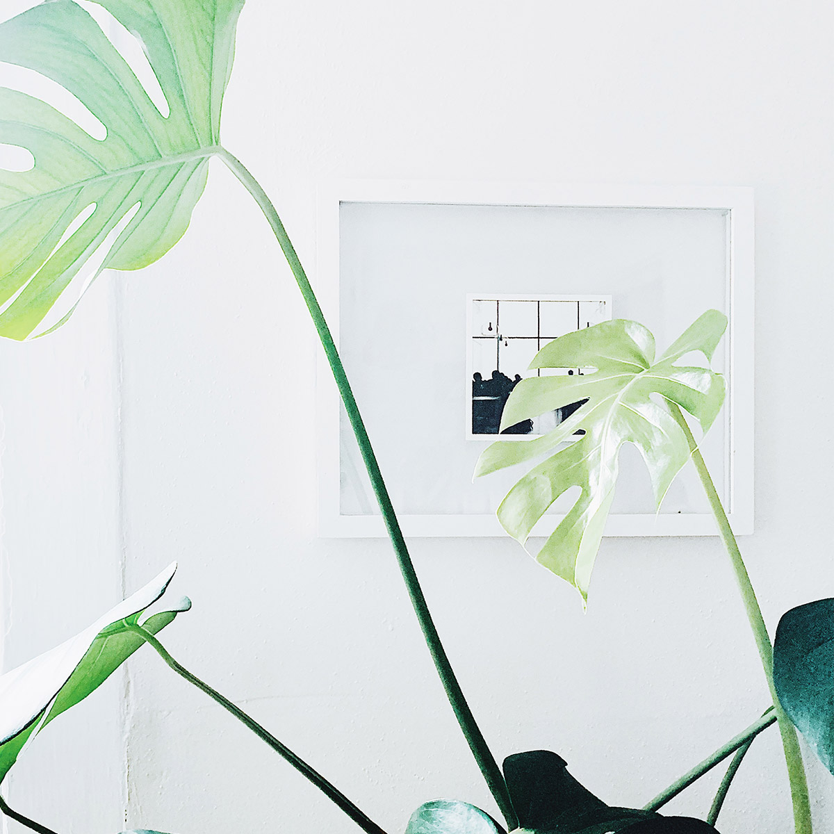 Framed Artifact Uprising Everyday Print hanging on wall and obscured by Monstera plant leaves