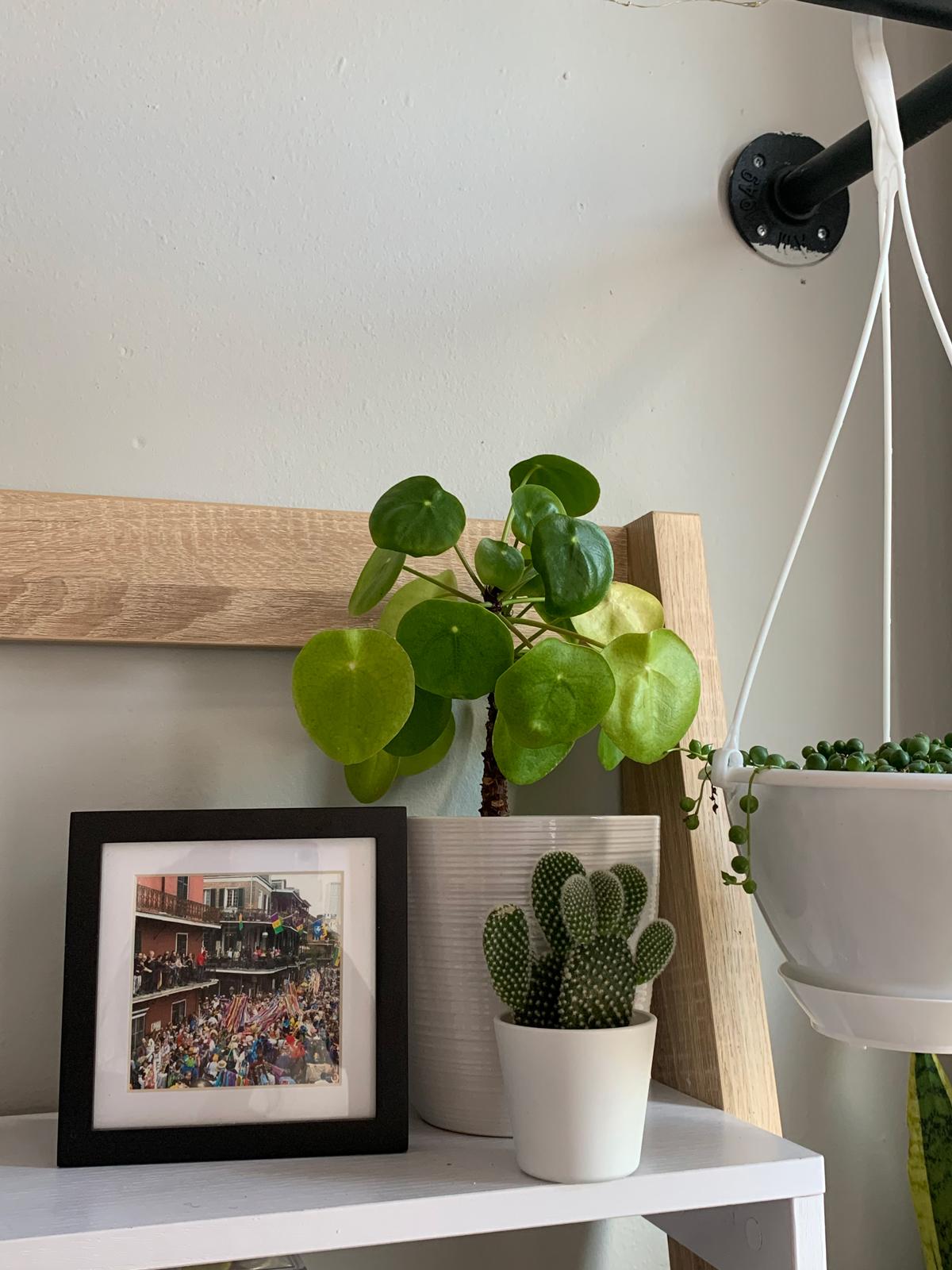 Photo frame on shelf next to potted plants
