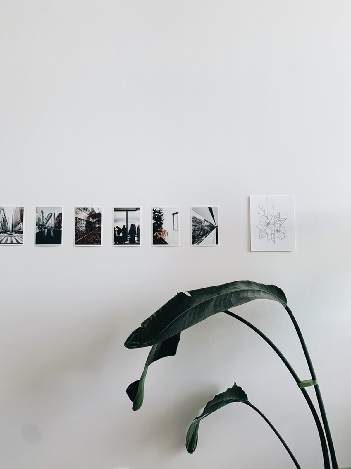Artifact Uprising photo prints lined on wall behind plant