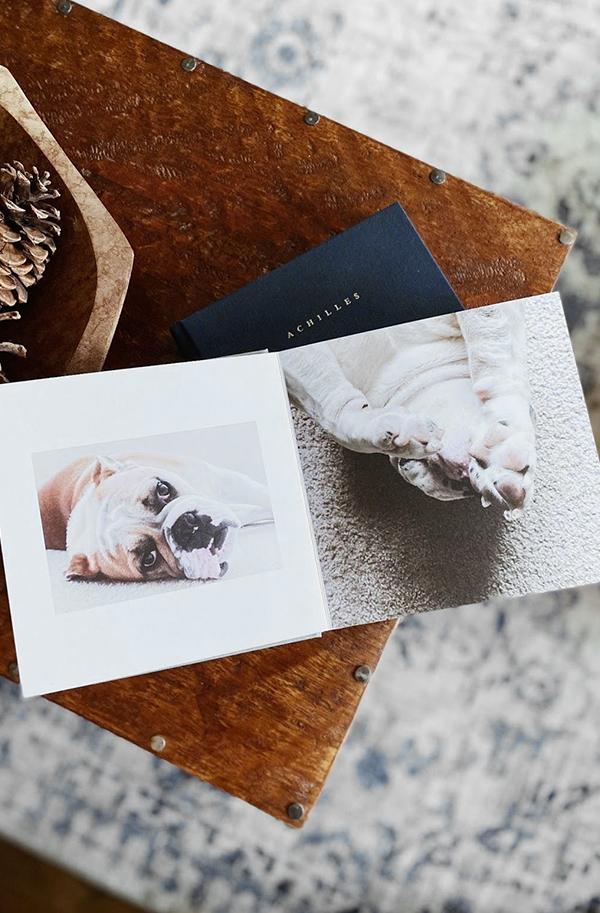 Artifact Uprising Everyday photo book opened up to photos of adorable English bulldog