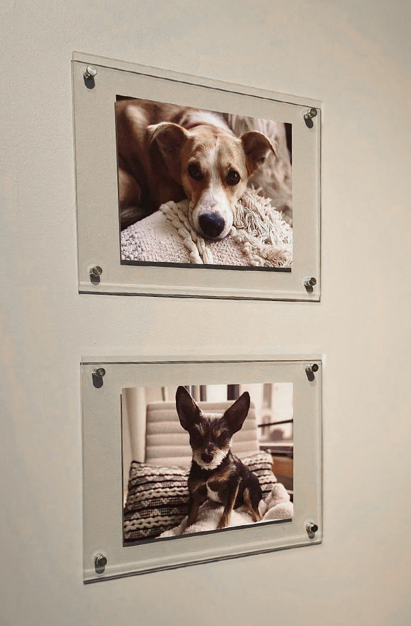 Artifact Uprising Floating Frames on wall featuring portraits of two dogs